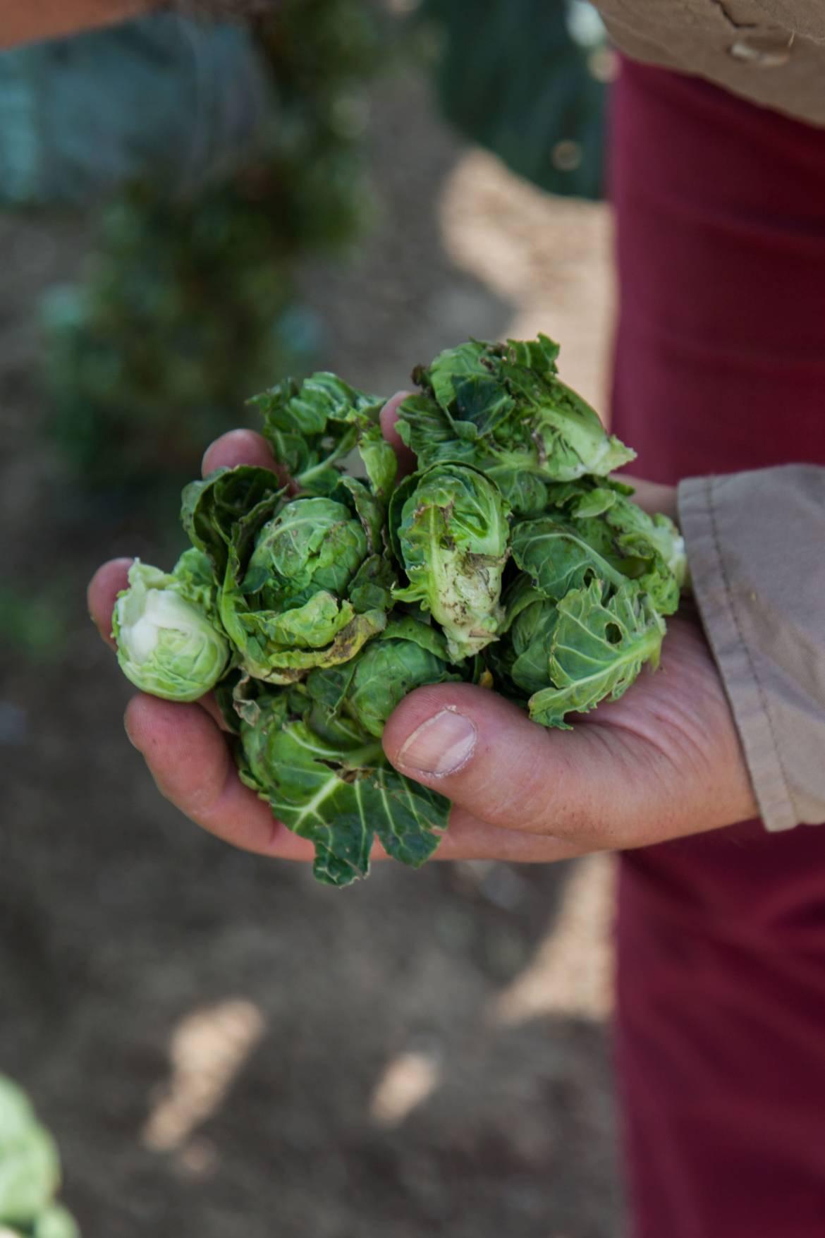 hortaliza-cosecha-min.jpg