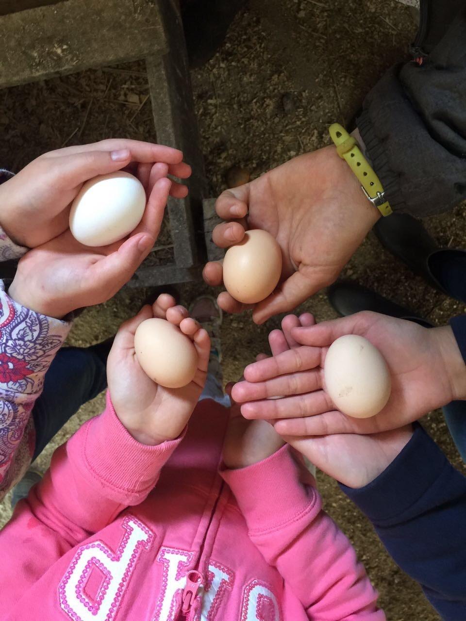 huevo-cosecha-min.jpg