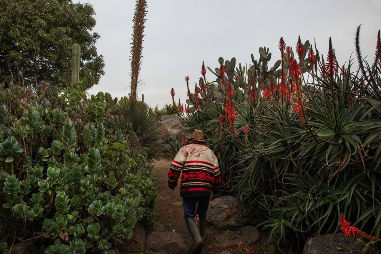 jardin-cactus-min.jpg